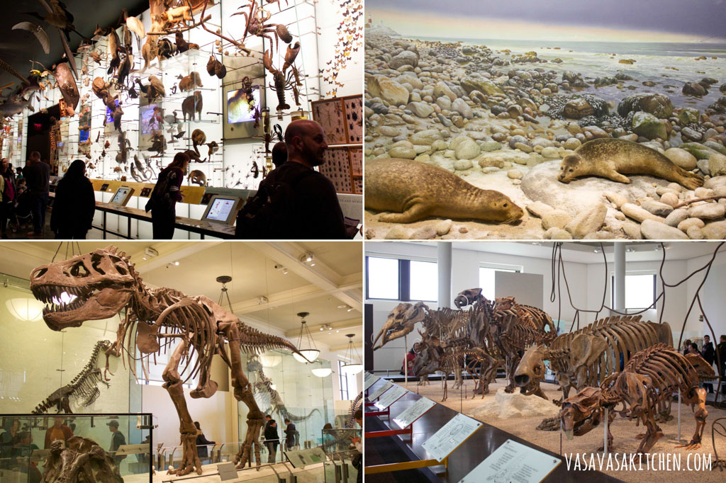 museum_of_natural_history_nyc