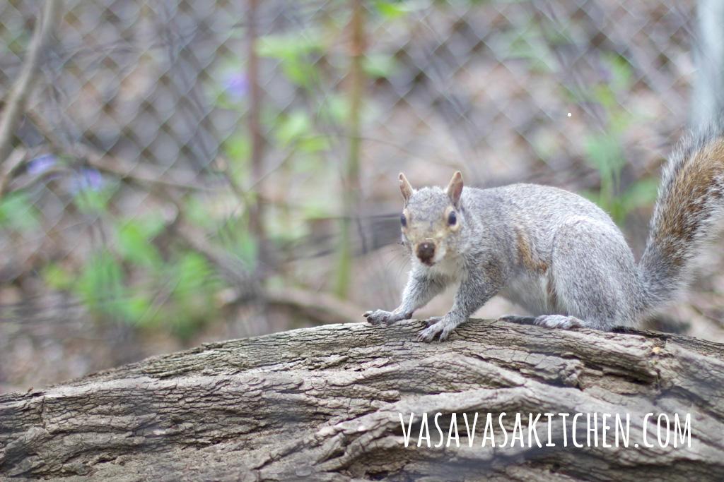 scoiattolo_central_park_nyc